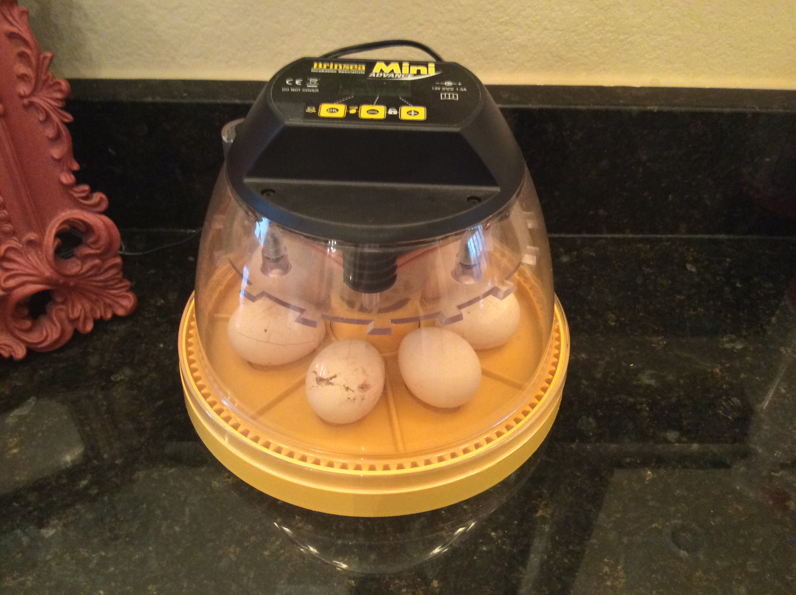 I am Incubating Chicken Eggs!